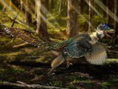 Descubierto en China un pariente del dinosaurio con plumaje y alas similares a las de un ave moderna