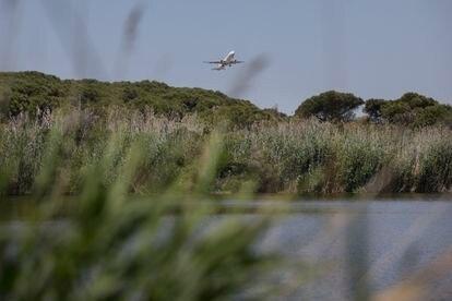 La laguna de La Ricarda, situada en la zona propuesta para la ampliación del aeropuerto de El Prat, en junio.