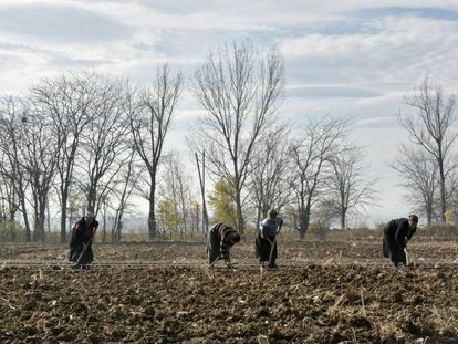 Agricultores aran el suelo en Lomtagora (Georgia).