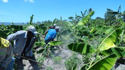Reforestación para prevenir deslizamientos en República Dominicana.