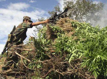 Un soldado mexicano quema una plantación de marihuana en Aguililla, en el Estado de Michoacán.