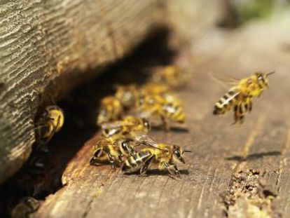 Los datos sobre la crisis de los insectos polinizadores son inconsistentes o no existen, lamentan los expertos europeos en una cumbre organizada en Bruselas