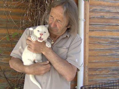 El cachorro de león blanco nacido en Guillena (Sevilla), el pasado día 2.
