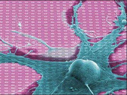 Imagen de un neurochip distribuida por la empresa alemana de nuevas tecnologías Infineon.