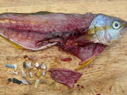 Un estudio aporta una de las primeras pruebas de que los microplásticos como los que contienen los cosméticos aumentan la mortalidad de peces