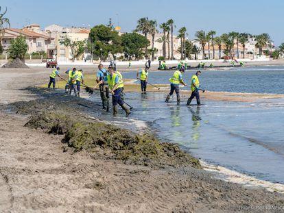 30 operarios se unen a las tareas de limpieza del Mar Menor el pasado mes de junio.