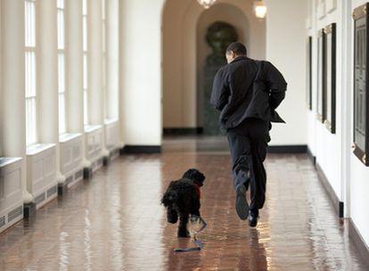 El presidente de Estados Unidos, Barack Obama, corre por los pasillos de la Casa Blanca con el perro de aguas portugués de la familia, llamado Bo.