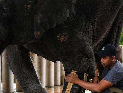 Un centro dedicado a la protección de elefantes en Kuala Lumpur