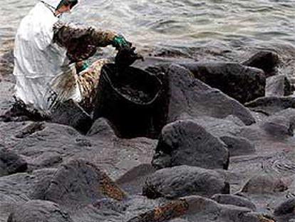 Un voluntario limpia rocas de chapapote, tras el naufragio del<b><i> Prestige.</b></i>
